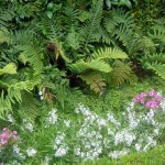 4.	Tassle Ferns; Trailing Angelonia, Phlox