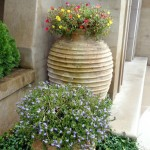 Honey Pots with Blue Scaevola (fan flower) and Portulaca/Purslane